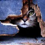 Duzina de cuvinte – Poveste pisiceasca