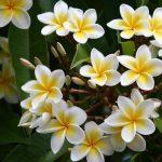 Elemis – poveste cu parfum floral și exotic